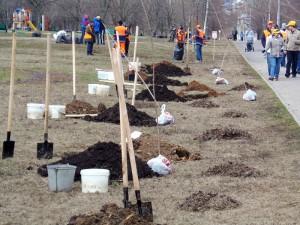 В рамках программы «Миллион деревьев» в районе Чертаново Центральное прошло озеленение территории