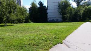 Теперь высота травы соответствует нормам