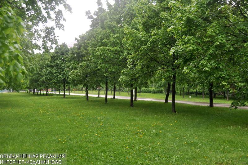 Деревья в районе
