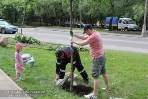Посадка деревьев в ЮАО