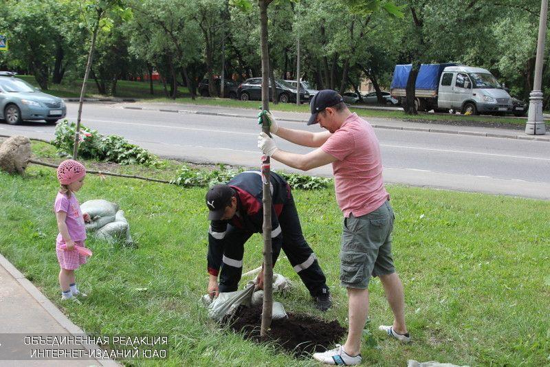Масштабные работы по озеленению провели в районе