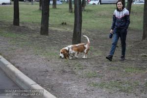 Вакцинация домашних животных от бешенства пройдет в ЮАО