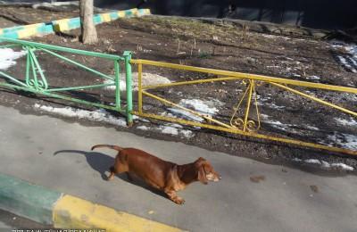 Вакцинация домашних животных от бешенства пройдет в районе Чертаново Центральное