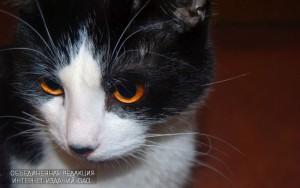 В районе отметят День кошек