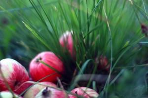 Яблоневый сад в районе пользуется популярностью среди местных жителей