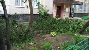 Обвалившиеся деревья в районе Чертановской улицы были убраны
