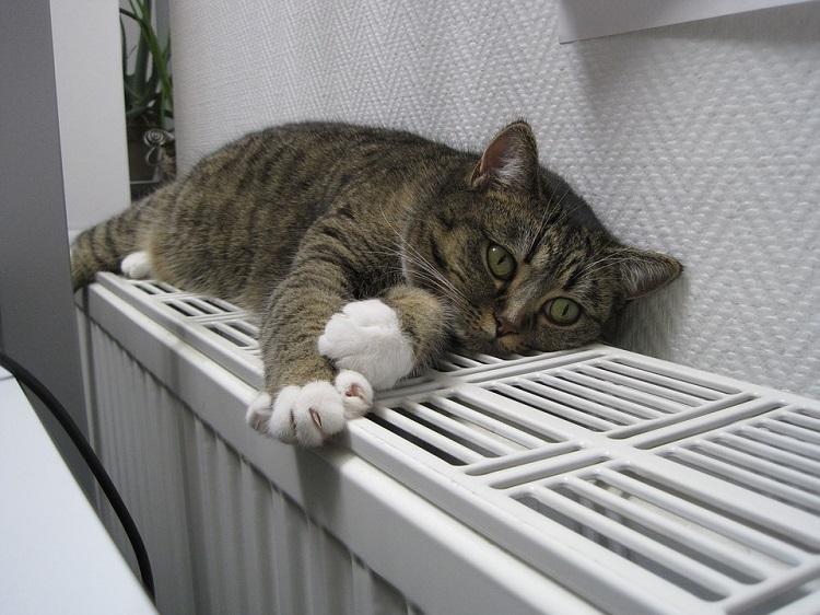 Кот на отопительной батарее