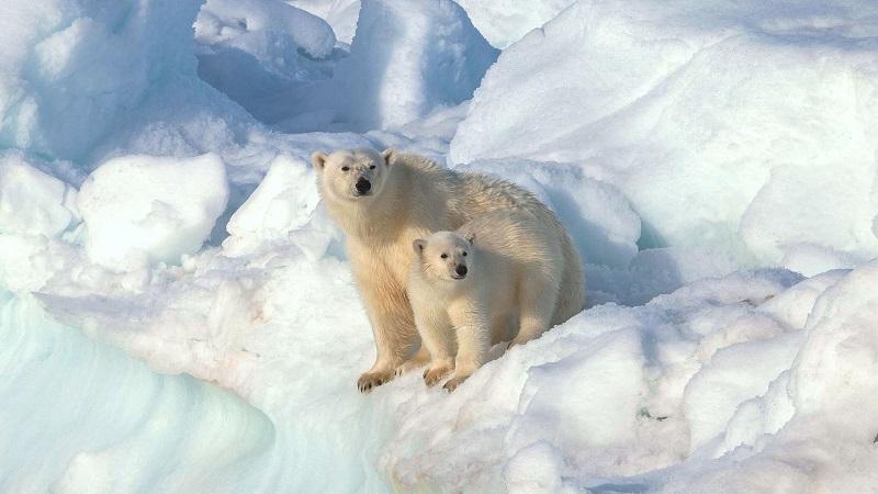 экоцентр «Битцевский лес», бесплатные мастер-классы, белый медведь