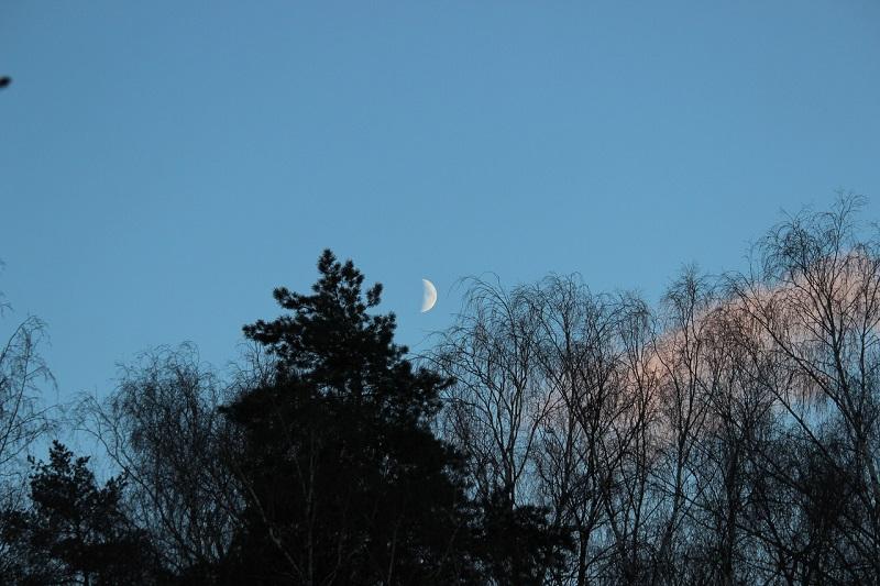 Битцевский лес, Мрсприрода, ночные прогулки, экскурсия